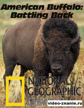 Американский бизон: Борьба за возвращение (2007)