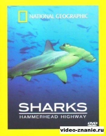 Пути акулы-молота (2007)