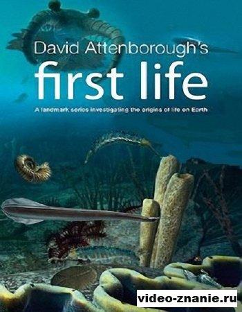 BBC: Первая жизнь. Зарождение (2010)
